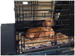 Einbau des Hundegitters im Januar 2017